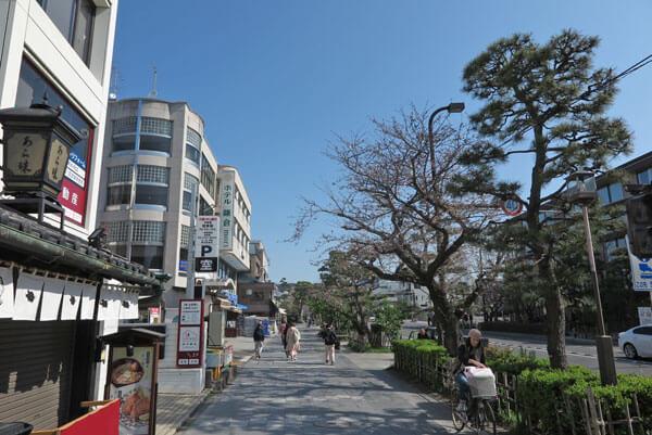 令和2年(2020年)3月26日、鎌倉駅前の桜。これはかなり咲いている方です。