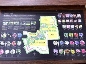 20181007_sakuratower-garden-9