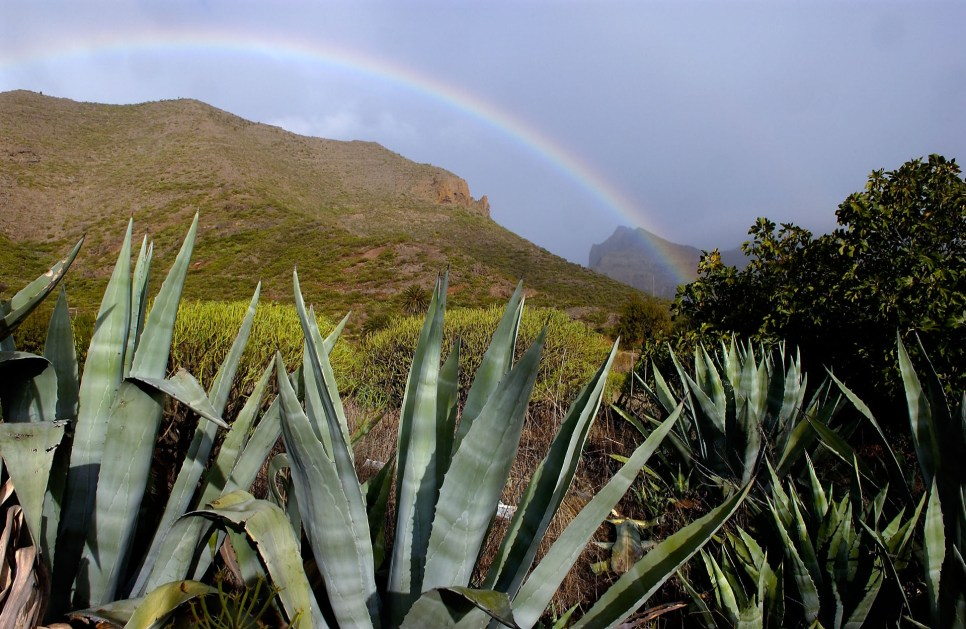 Tenerife ruta volcanes_13