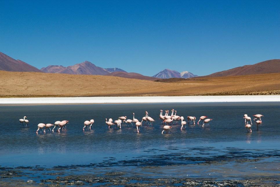 Laguna Charcota. Bolivia