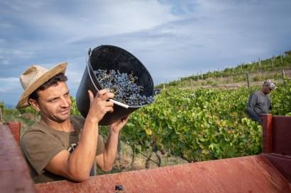 El viñedo está en el Parque Natural del Cap de Creus.