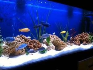 Бял грунд за аквариум