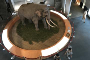 為大象林旺與馬蘭寫歷史