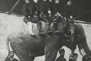近代臺灣人看大象