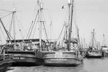 戰後台灣漁業資源之接收(1945-1950)