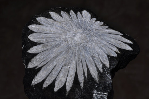 White Andalusite