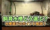 クサガメ飼育 水槽選びのポイント