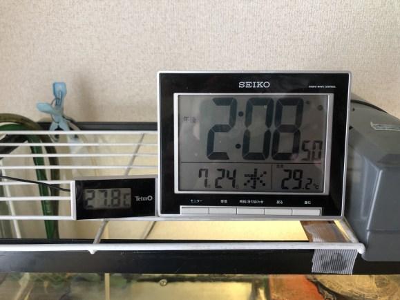 カメ飼育 夏場の気温と水温 扇風機を使うタイミング クサガメ