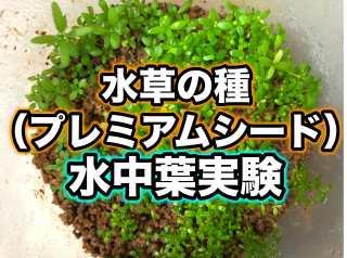 水草の種(プレミアムシード)を水中葉に変化させる育成実験!ソイルと大磯・CO2有無で試してみた