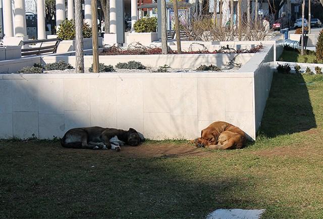 psi-lutalice-spanjolski trg