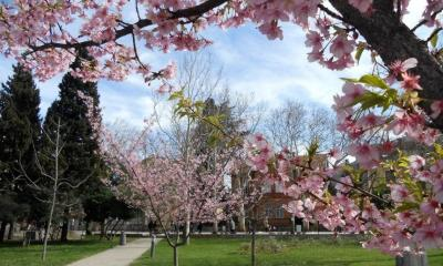 Proljeće u Mostaru