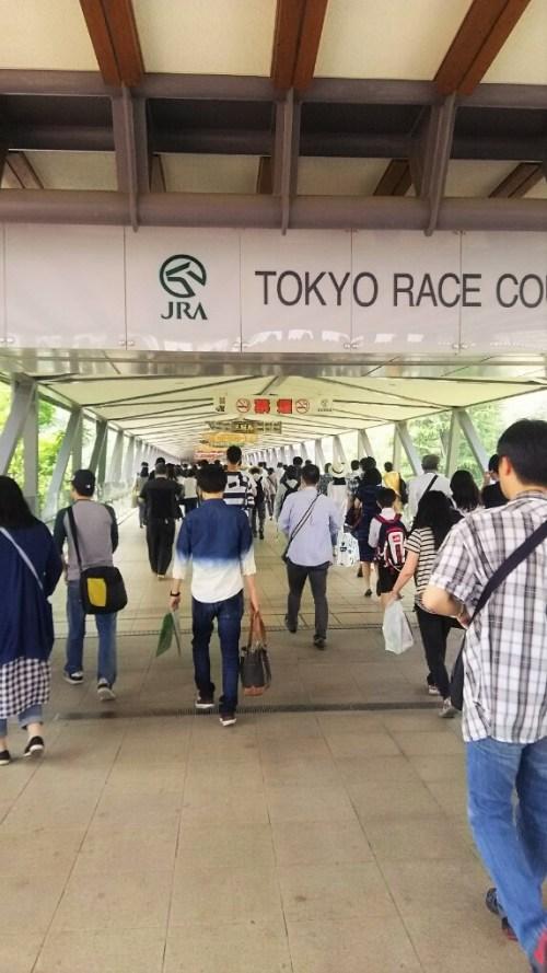 東京競馬場に到着3枚目