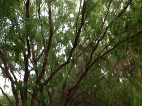 Verdant shade reaching across the path.