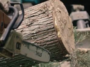 当初、床には古材を使おうと思ってたんですが、伐採を体験してからは杉の赤白の木色でフロアを埋め尽くしたいという考えに変わりました。
