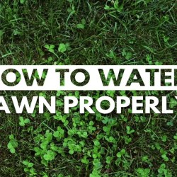 City of Kamloops – How to Properly Water your Lawn