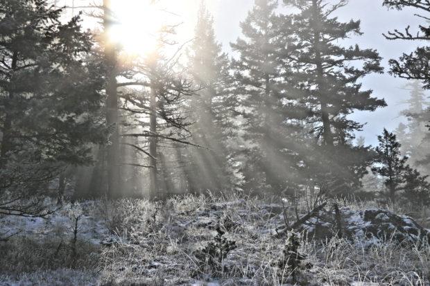 A Frosty Sugarloaf Hill – Kamloops Trails