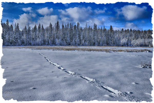On the Snow on the Butterfly Marshes