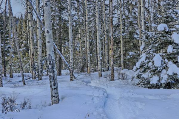 Back to Bush – Kamloops Trails