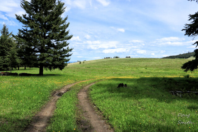 Hiking in the Hamilton Corrals Commonage