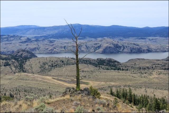 Ragged Red Ridge view