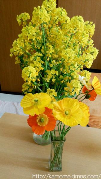 菜の花とポピー