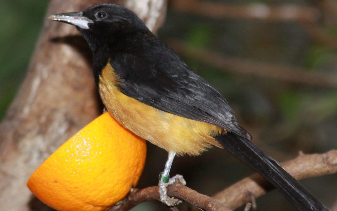 An Ornithological Adventure