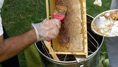 Photo of نحالو كربلاء ينتجون اكثر من 116 الف كغم من العسل