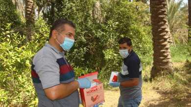 Photo of مديرية زراعة كربلاء:مختصون في مجال الوقاية يتابعون حملة القوارض الزراعية في شعبتي زراعة الهندية والجدول الغربي