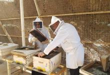 Photo of كربلاء تشهد اقامة ورشة عمل لتطوير قطاع النحل في  العراق