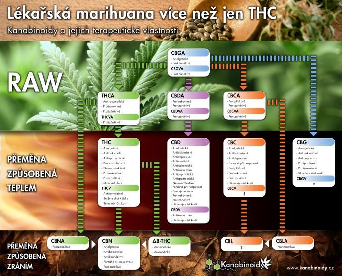 Vznik a terapeutické vlastnosti kanabinoidů