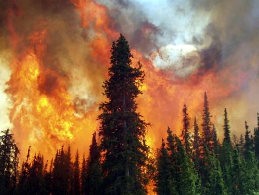 wildfire_usa