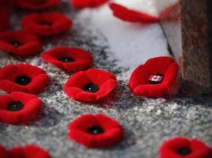 poppy_remembrance_day