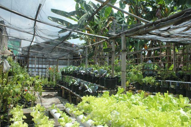 Kebun Sayur Juga Ada di Kota Lho, Ini Buktinya