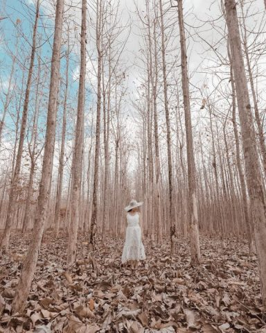 hutan kering gunungkidul