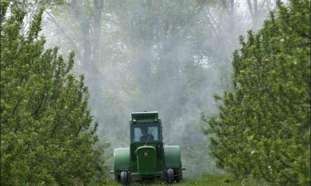 Земјоделците да внимаваат при прскање на овошните дрвца