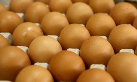 Цената на јајцата годинава е пониска во споредба со ланската цена