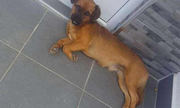 Апел за пронаоѓање изгубено куче