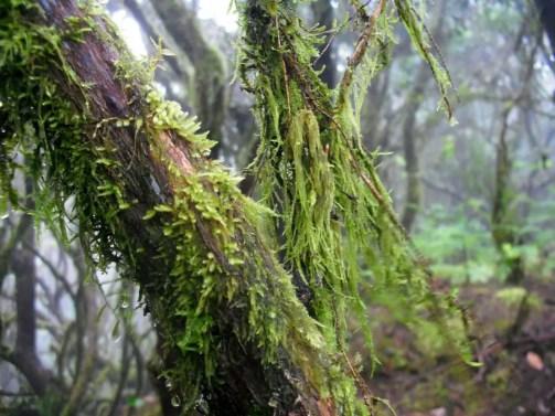 La Gomera - Bosque del Cedro 2