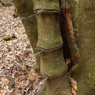 Baum - geschundene Natur