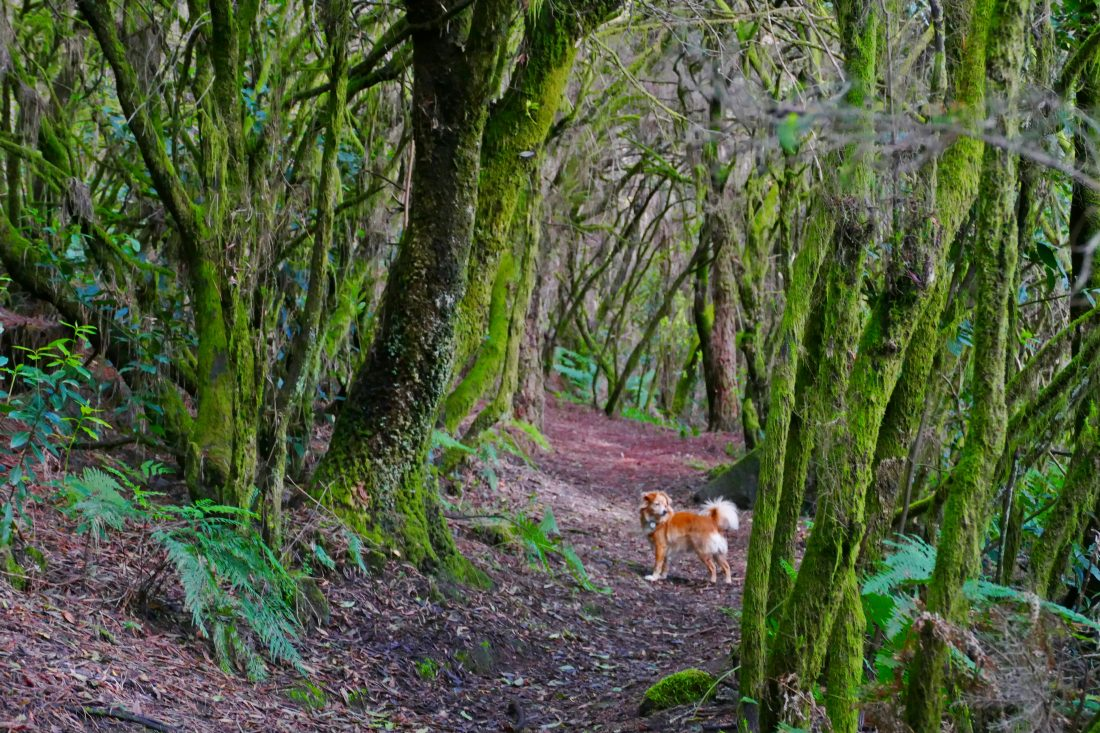Bäume - Lorbeerwald