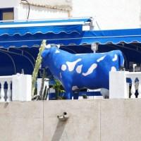 Die blaue Kuh von El Cotillo