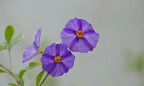 Blüten Details