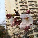 桜と虹とお引越し