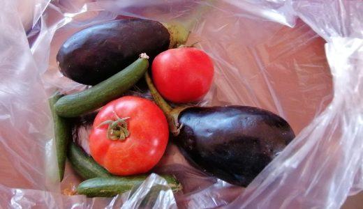 エジプト!ルクソールで食材の買い物!スークでは野菜などを買ってました