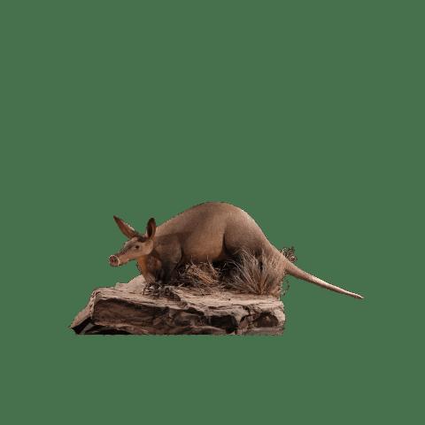 aardvark full size mount