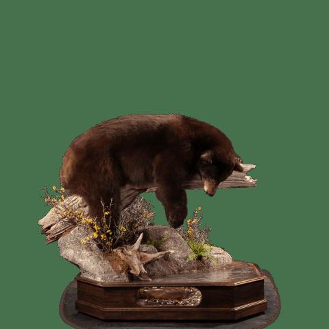 sleeping black bear on a branch