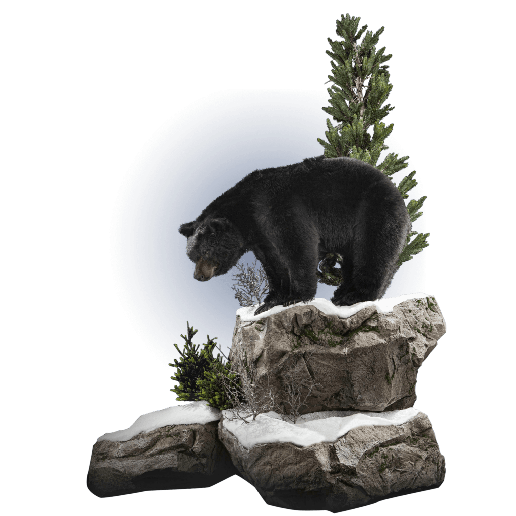black bear on rocks mount