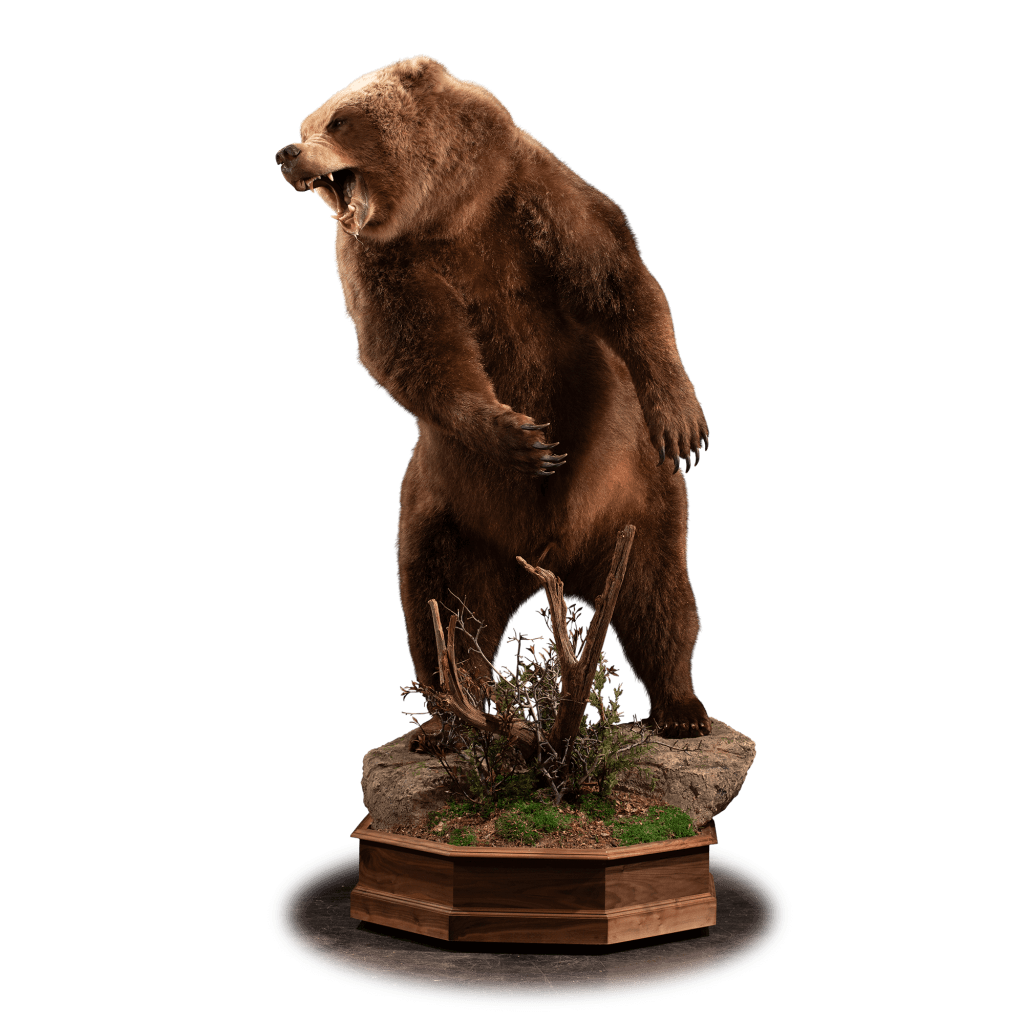 Brown bear standing up taxidermy