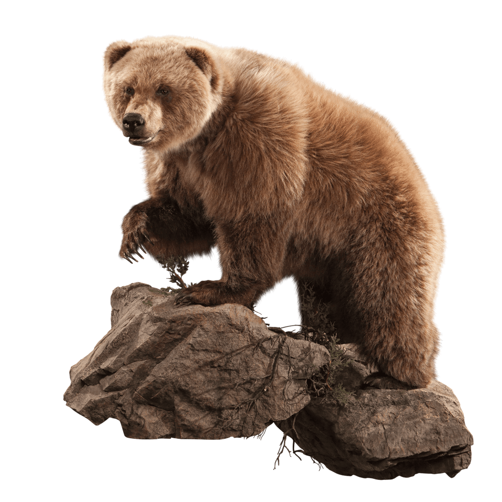 Life size brown bear on rocks
