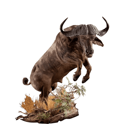 jumping cape buffalo life size